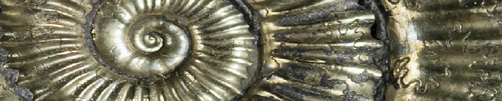 Mineralien- und Fossilienbörse